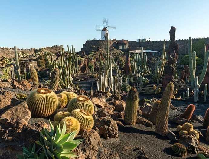 Сад кактусов - самое большое собрание кактусов в мире - Чем заняться на Лансароте